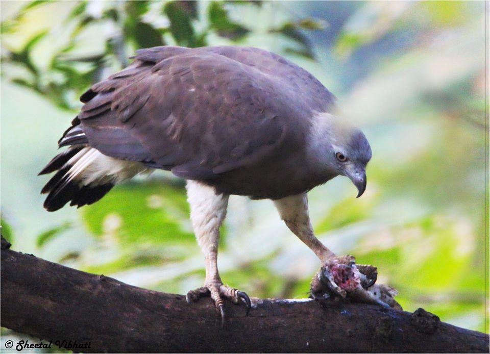 Photo of Take a Virtual tour to Mowgli's land -Pench National Park 20/30 by Sheetal Vibhuti escapingsoul.in