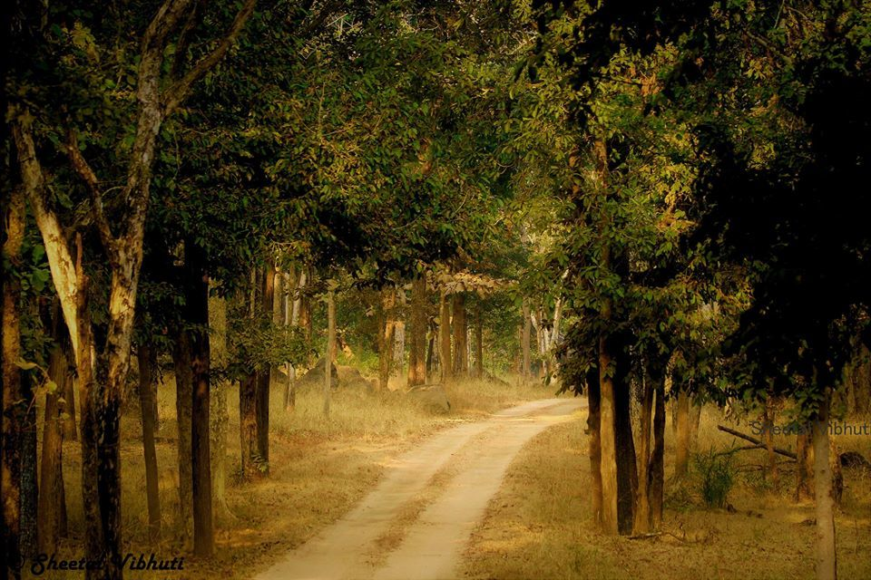 Photo of Take a Virtual tour to Mowgli's land -Pench National Park 25/30 by Sheetal Vibhuti escapingsoul.in