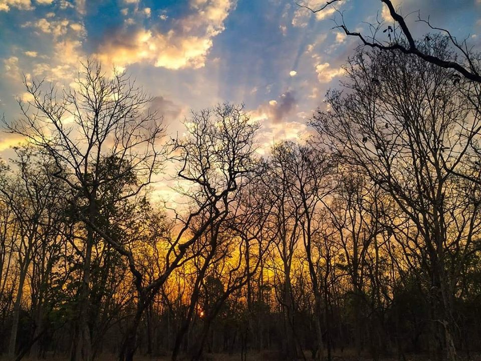 Photo of Take a Virtual tour to Mowgli's land -Pench National Park 27/30 by Sheetal Vibhuti escapingsoul.in