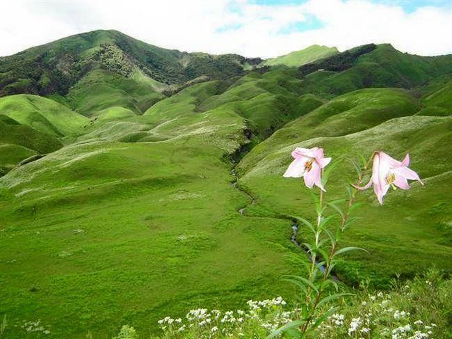 Photo of Dzükou Valley Trek, Kohima, Nagaland, India by Sheetal Vibhuti escapingsoul.in