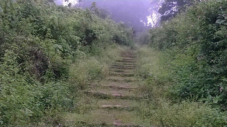 Nature S Path Heritage O S