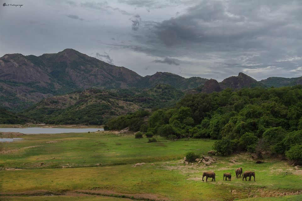 Photo of Why Is Valparai a Dream Destination for Wild Life Photo Enthusiasts? 7/12 by Aparna Sharma