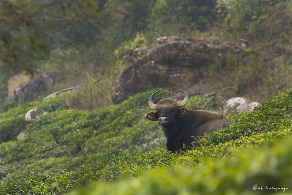 Photo of Why Is Valparai a Dream Destination for Wild Life Photo Enthusiasts? 2/12 by Aparna Sharma