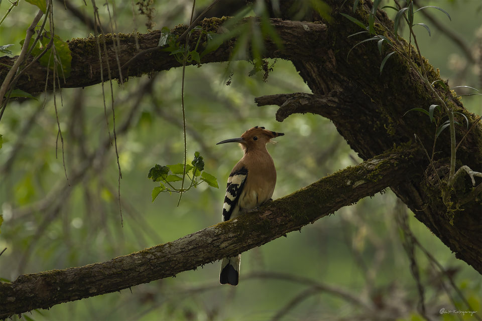 Photo of Why Is Valparai a Dream Destination for Wild Life Photo Enthusiasts? 5/12 by Aparna Sharma
