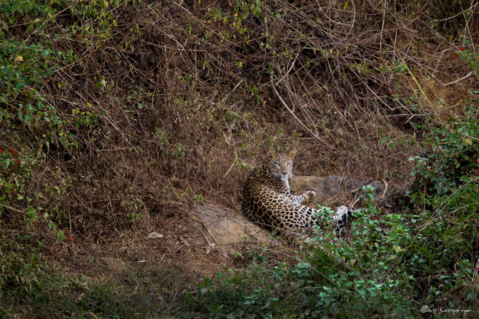 Photo of Why Is Valparai a Dream Destination for Wild Life Photo Enthusiasts? 8/12 by Aparna Sharma