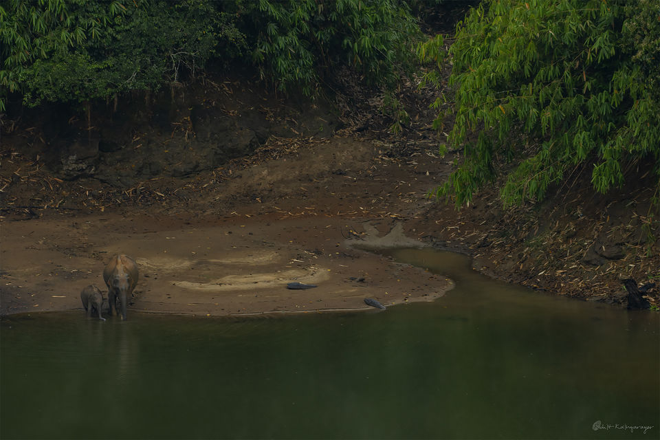 Photo of Why Is Valparai a Dream Destination for Wild Life Photo Enthusiasts? 11/12 by Aparna Sharma