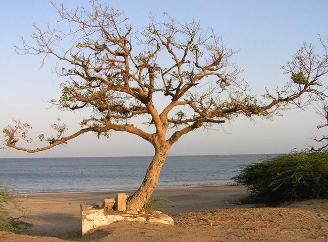 Photos of View of the Beach, Diu 1/7 by Naina Kataria