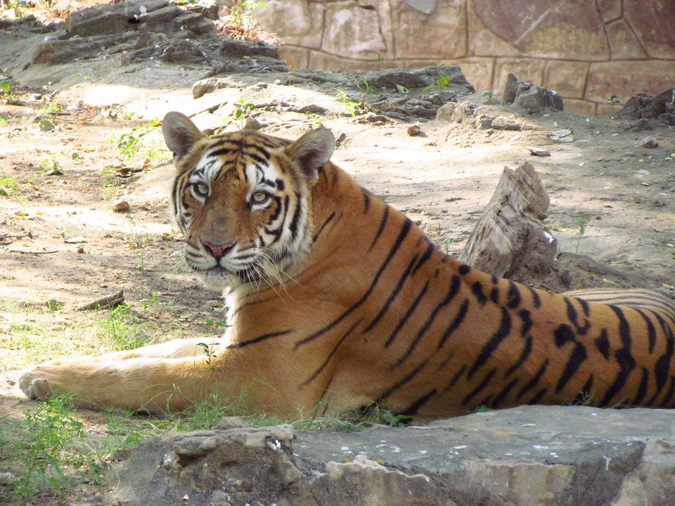Photos of Jaipur, Rajasthan, India 5/5 by Prahlad Raj