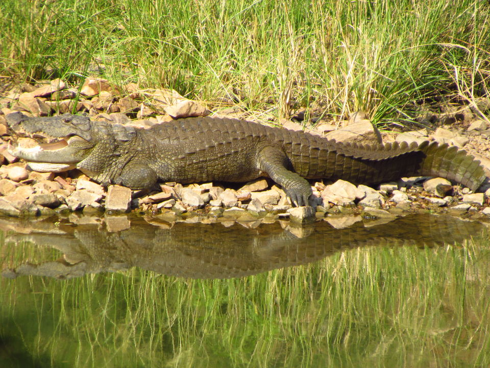 Photos of Ranthambore National Park, Prempura, Rajasthan, India 4/4 by Prahlad Raj