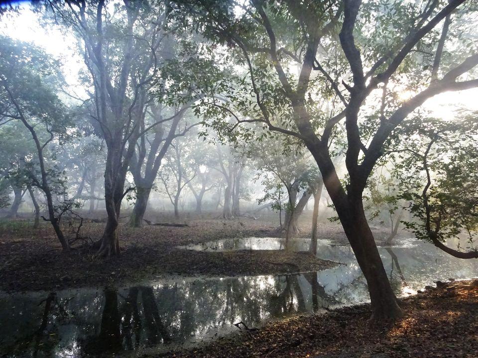 Photos of Bharatpur - Keoladeo National Park 3/8 by Prahlad Raj
