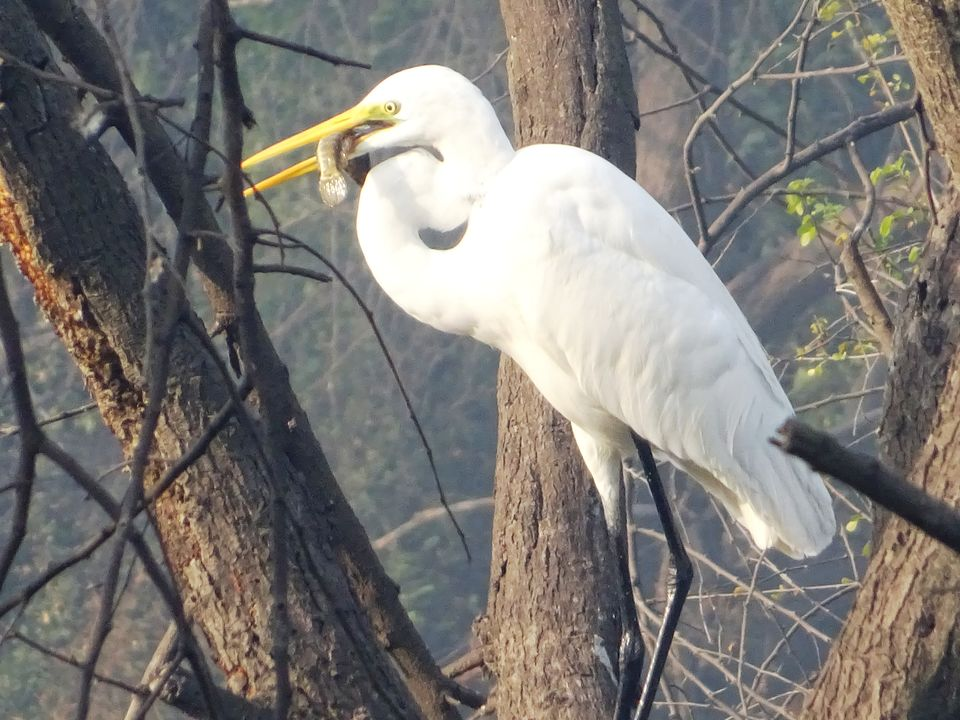 Photos of Bharatpur - Keoladeo National Park 4/8 by Prahlad Raj