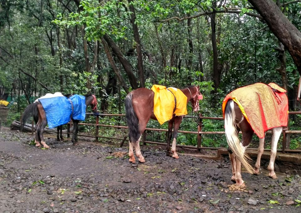 Photos of Matheran - Monsoon Hiking in the Jungle 11/11 by Prahlad Raj