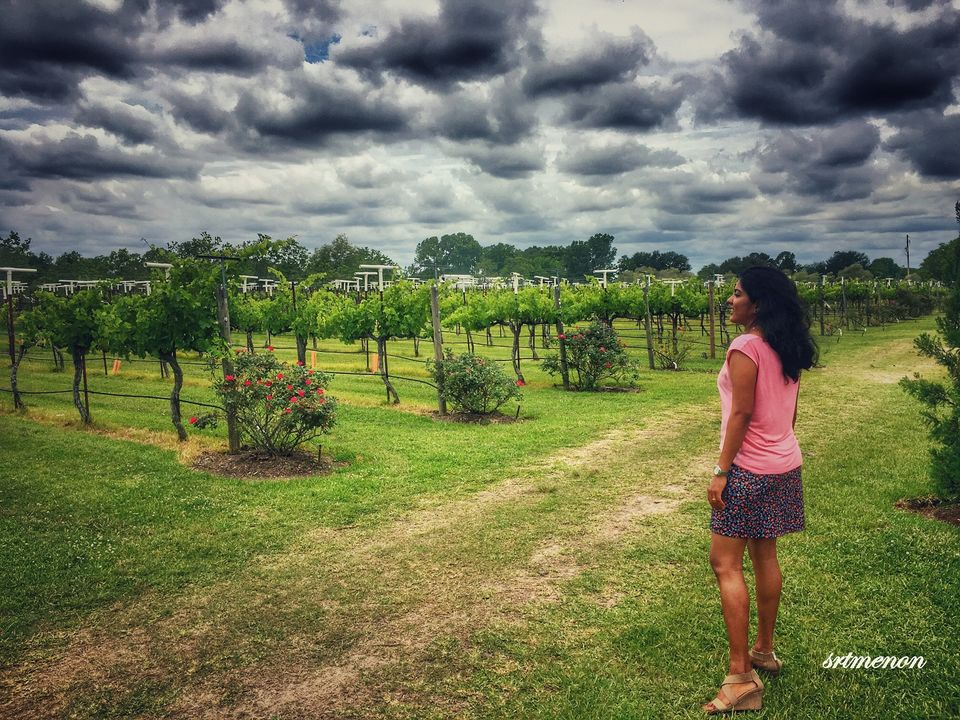 Photos of The wine buzz 1/5 by sruthy menon