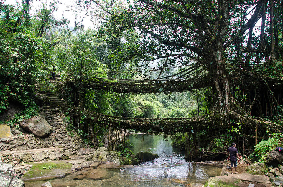 Photos of Living Root Bridge !!! 1/1 by Garima Jain