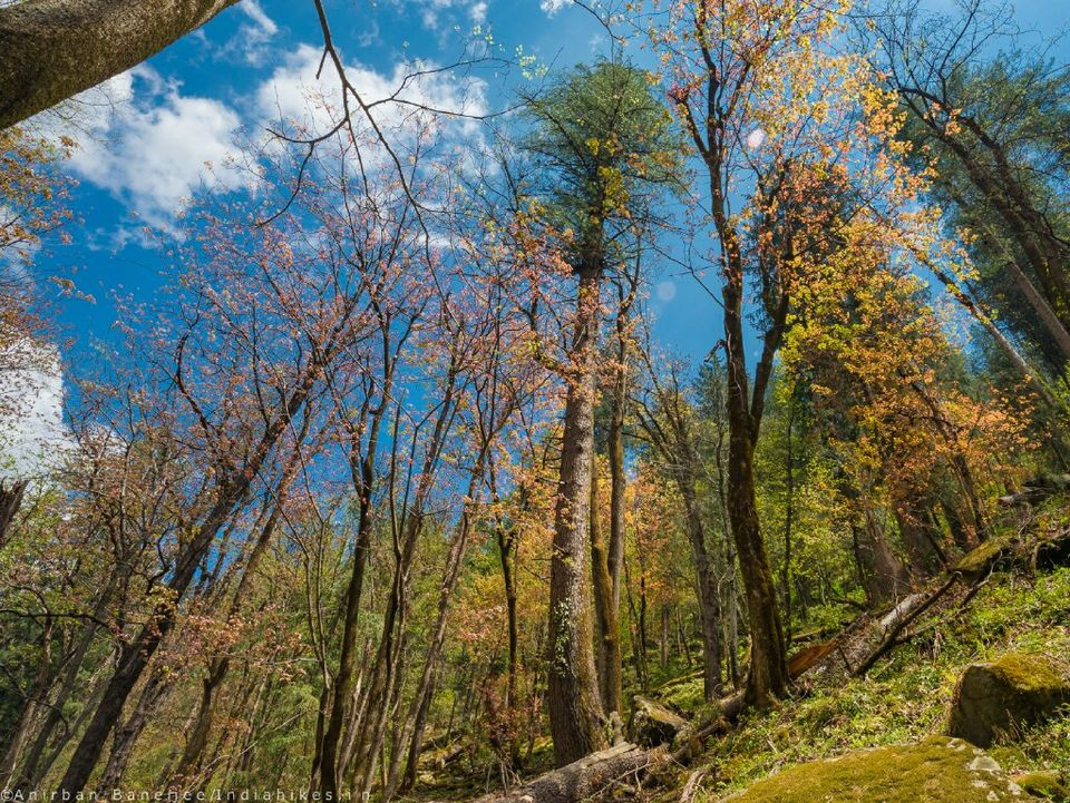 6 Best Treks To Do In October And November To Witness The Spectacular Himalayan Autumn