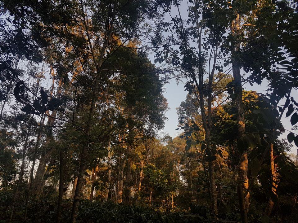Photo of Rare Earth Estate, Kaggodlu, Biligeri, Madikeri Taluk, Coorg, Karnataka, india, Karnataka, India by The Fervid Traveller