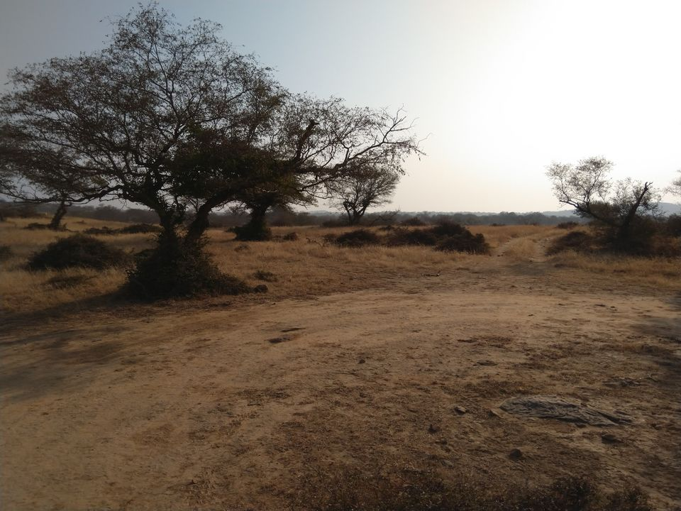 Photo of My Ranthambore Experience by Ritusree exploring