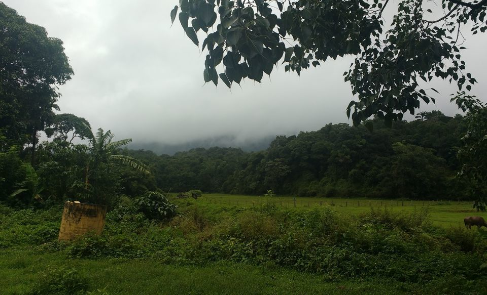 Photos of A smaller scotland and the epitome of glorious charm: Coorg! 1/1 by Anindita Nayak