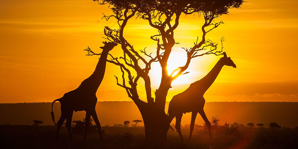 Out of Africa: Kenya