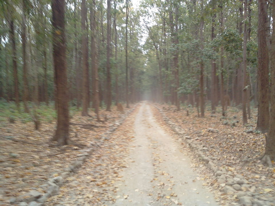 Photos of Jim Corbett : The ride you won't forget 1/1 by Nikhil Aggarwal