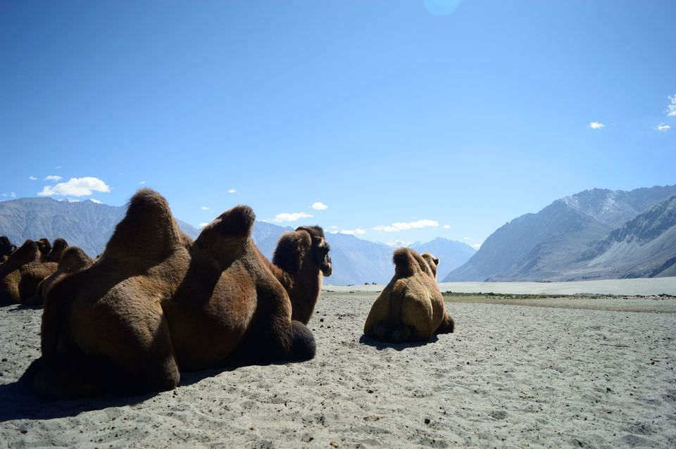 Photos of 7 Things to know before Visiting Ladakh that will make your journey worth ! 1/1 by Nikhil Aggarwal