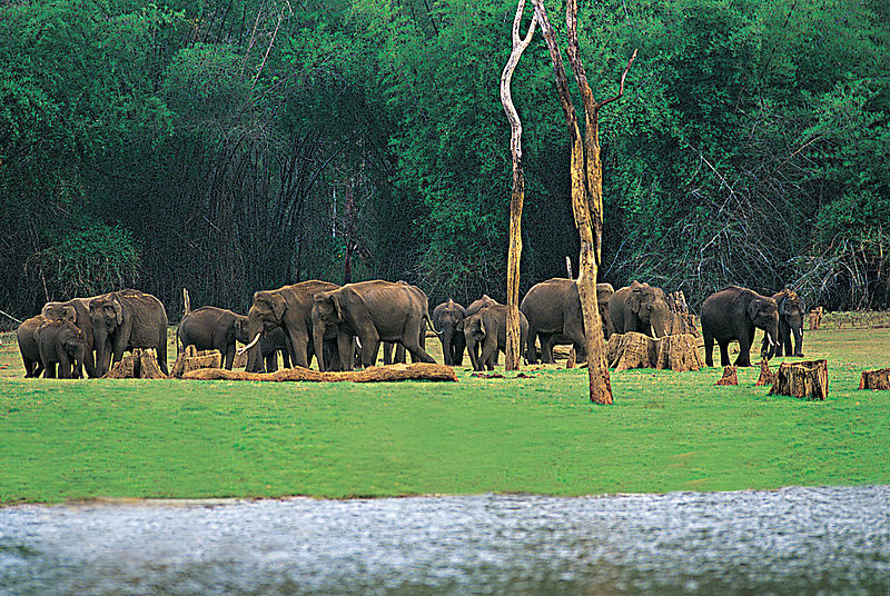 The Mammoth Beckons: Best Places In India To Spot Elephants