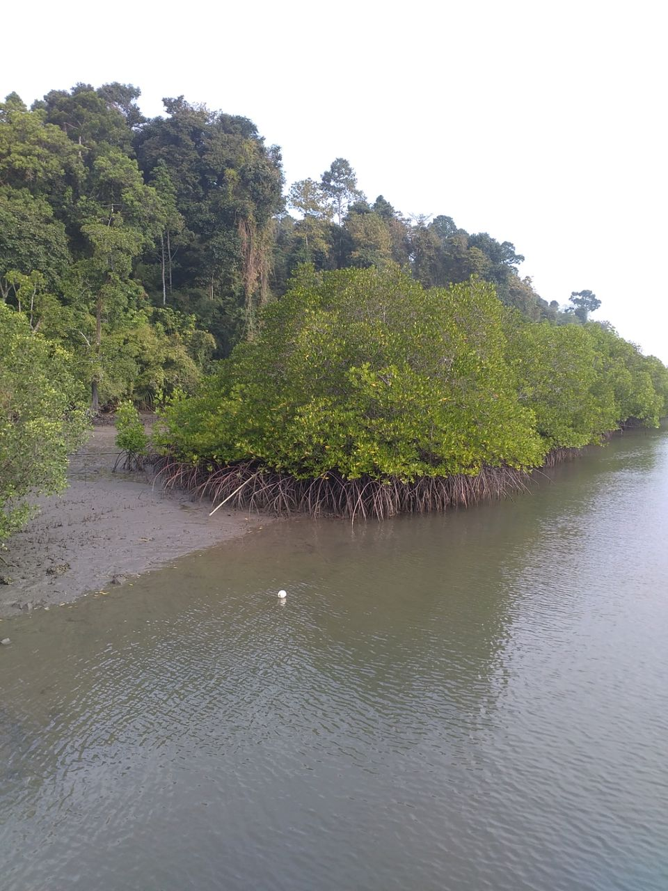 Photos of Meandering through the Mangrove creeks at Baratang Island – A boat ride from Nilambur Jetty. 1/1 by Karim S A