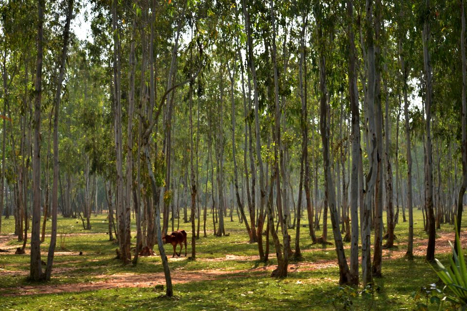 Photos of The cultural hamlet on red soil – Shantiniketan 1/1 by Saikat Mazumdar