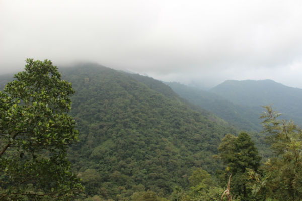 The Lush Green Forests Of This Misty Hill Station In Kerala Will Steal Your Heart