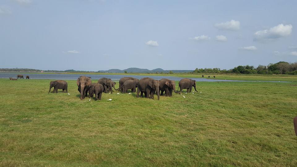 Photos of Beautiful Sri Lanka !! 1/1 by Sudipta Chowdhury