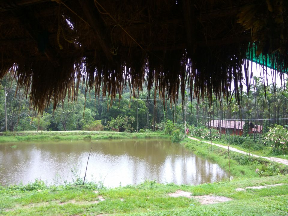 Photos of A small lake amid lush green surrounding <br> 1/1 by Nidhi Jain