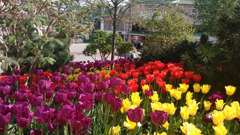 Photo of Liseberg Park, Gothenburg, Sweden by theuncanny_traveller