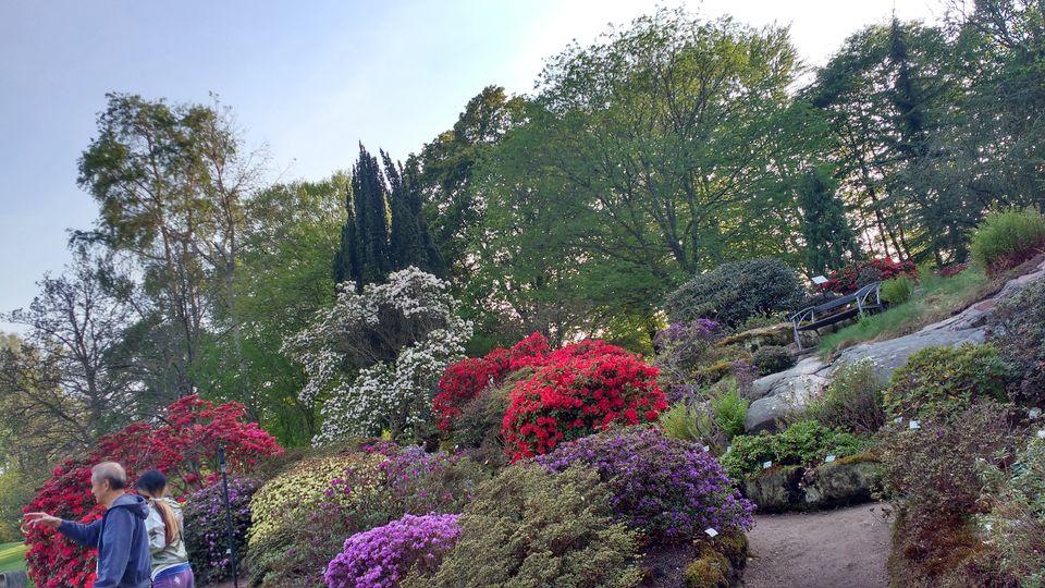 Photo of Göteborg Botaniska Trädgården, Gothenburg, Sweden by theuncanny_traveller