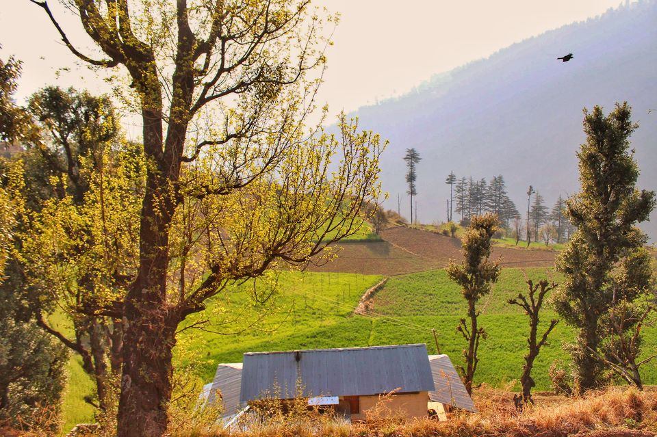 Photo of Forest trails, Wood houses and Beautiful farms- Sainj Valley, Great Himalayan National Park 2/2 by Nancy