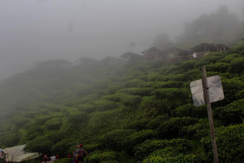 Photos of Nestled in the mountains: Darjeeling 1/11 by Debasish Mishra