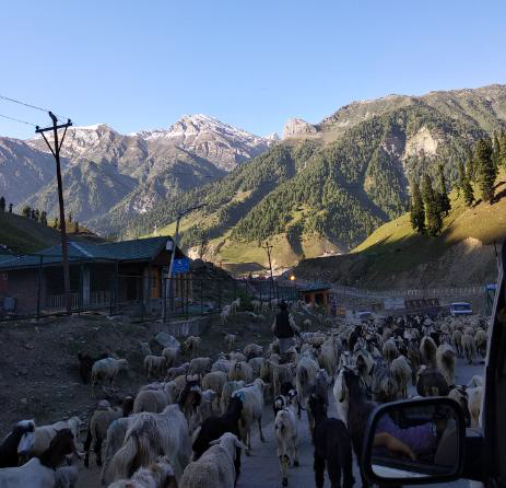 10 days in Leh,[Covering Srinagar-Leh and Manali-Leh highway(shareTaxi)], A comprehensive itinerary.