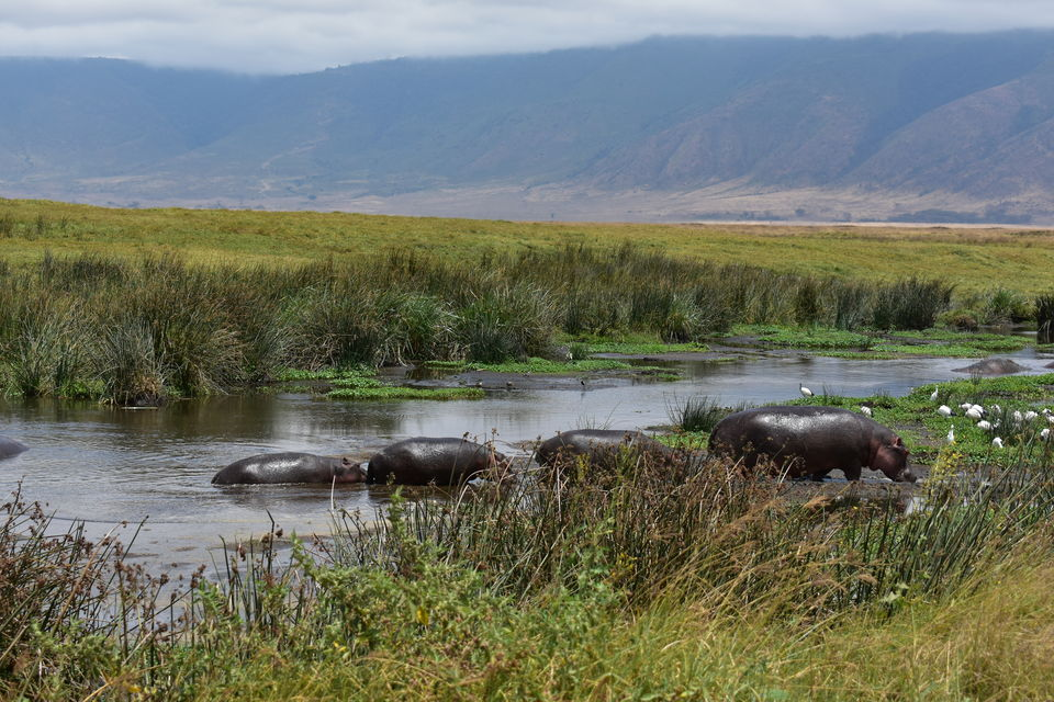Photo of 5 Things to know before you go to Ngorongoro Crater, Tanzania 6/6 by The Trunk Travellers