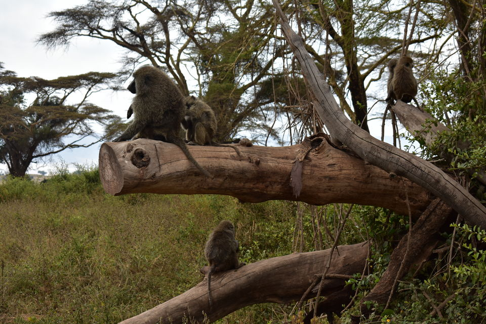 Photo of 5 Things to know before you go to Ngorongoro Crater, Tanzania 3/6 by The Trunk Travellers