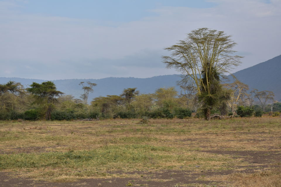 Photo of 5 Things to know before you go to Ngorongoro Crater, Tanzania 4/6 by The Trunk Travellers