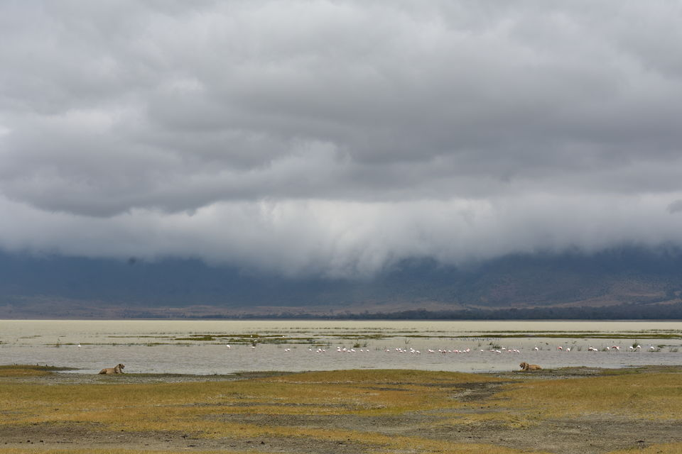 Photo of 5 Things to know before you go to Ngorongoro Crater, Tanzania 5/6 by The Trunk Travellers