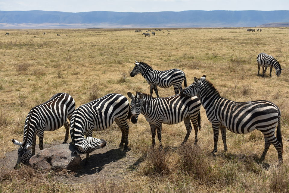 Photo of 5 Things to know before you go to Ngorongoro Crater, Tanzania 1/6 by The Trunk Travellers