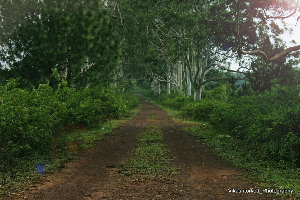 Netarhat Jharkhand: Journey from Ranchi to Netarhat ...