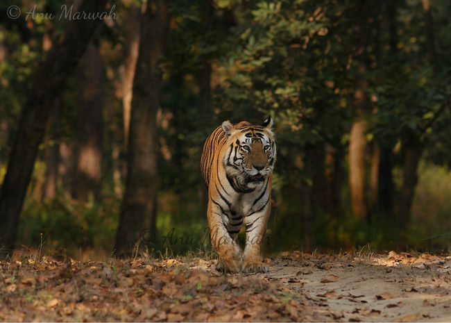21 Reserves In India Where Tigers Are The Kings And You Are The Guests!