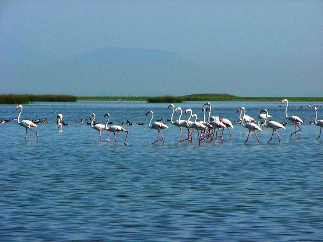 Odisha, Paradise for Tourist