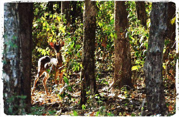 A Traveler's Guide to Dandeli Wildlife Sanctuary