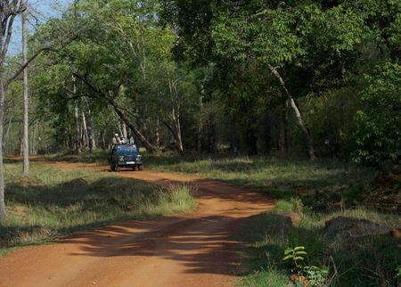 In the Land of Tigers - Three days in Tadoba-Andheri Tiger Reserve