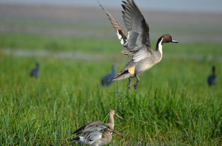Mangalajodi (Odisha) : Visiting birds' playground and photographers' paradise