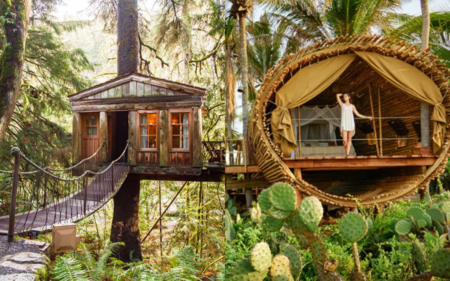 Cant Afford Bali Stay At These Tree Houses In Kerala For The