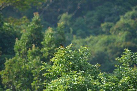 Into the Jungle - Ecoscape Devala