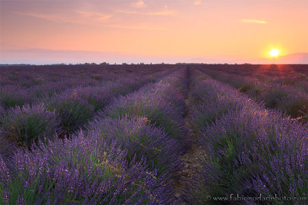 Provence, France: Painted in Lavender